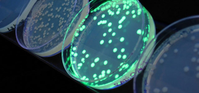 Could The European Superbug Have Been Bioengineered?